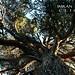 Cedars of Hindukush, Pakistan