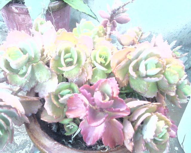 Plante d 39 int rieur flickr photo sharing - Porte plante d interieur ...