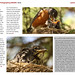 The Art of Photographing Wildlife book sample page 2
