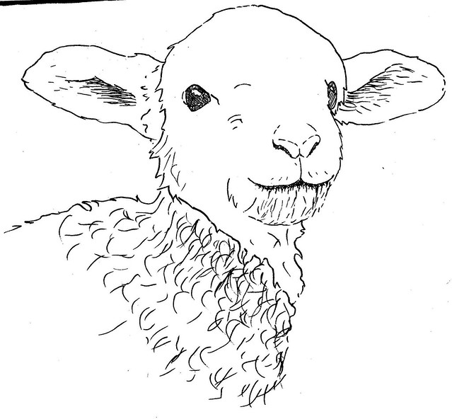 Lamb Drawing Sketch In Progress Of One Of Last Years