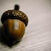 157/365. Acorn - Oak Nut - The Scrat Problem.