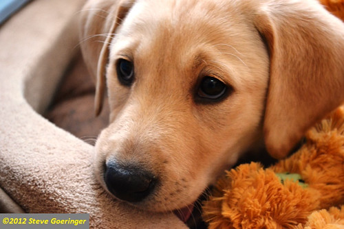 Image Result For Adopted Dog Can