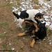 Bert and Bear snow day play 2