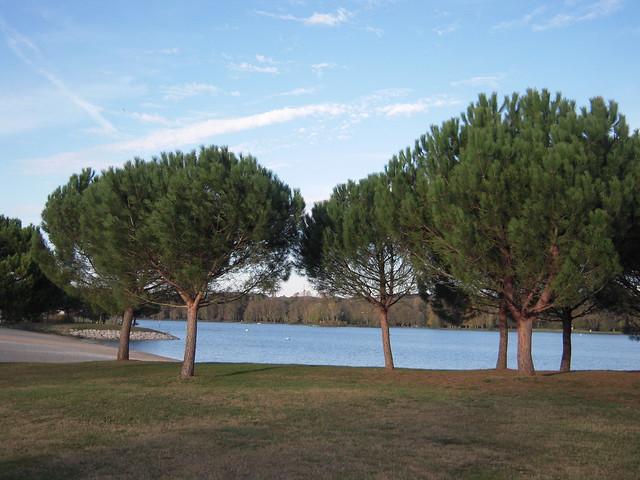les pins parasol dans les 233 es 1972 1973 l etat acquier flickr photo