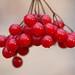 Low hanging fruit . . .