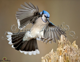 Mr. Jay! | by JRIDLEY1