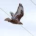 IMG_9255-FEHA-72dpi-ebird