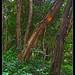 En el bosque 2
