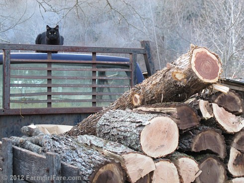 Mr. Midnight on firewood watch duty | by Farmgirl Susan