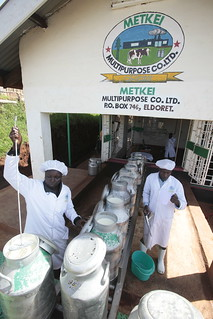 EADDP (East African Dairy Development Program) Metkei Multipurpose Company Ltd. | by Heifer International