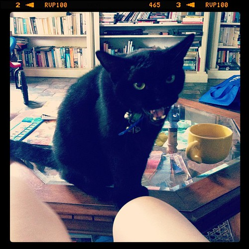 Harry Houdini questioning my assertion that cats do not belong on coffee tables | by veganza