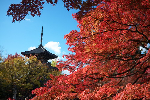 Momiji '11 - autumn leaves #9 (Sinnyo-dou temple, Kyoto) | by Marser