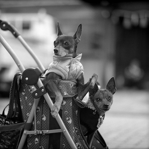 "OOSU Trip ""Drive dogs"" 