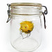 Bee Girl in a Jar