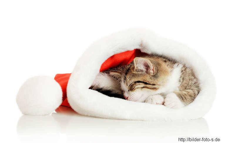 katzen weihnachtsbilder katzen weihnachtsbilder flickr. Black Bedroom Furniture Sets. Home Design Ideas