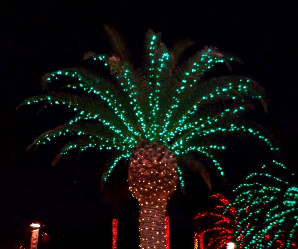 Largo florida botanical gardens holiday lights in the - Florida botanical gardens christmas lights ...