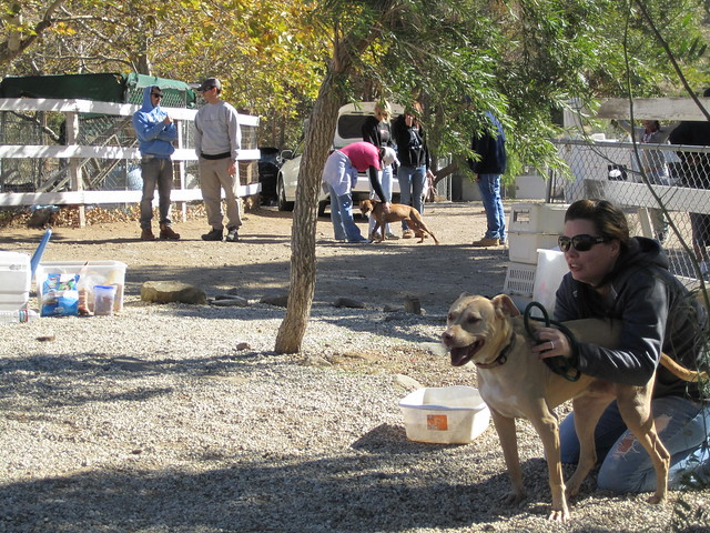 Villalobos Dog Rescue California