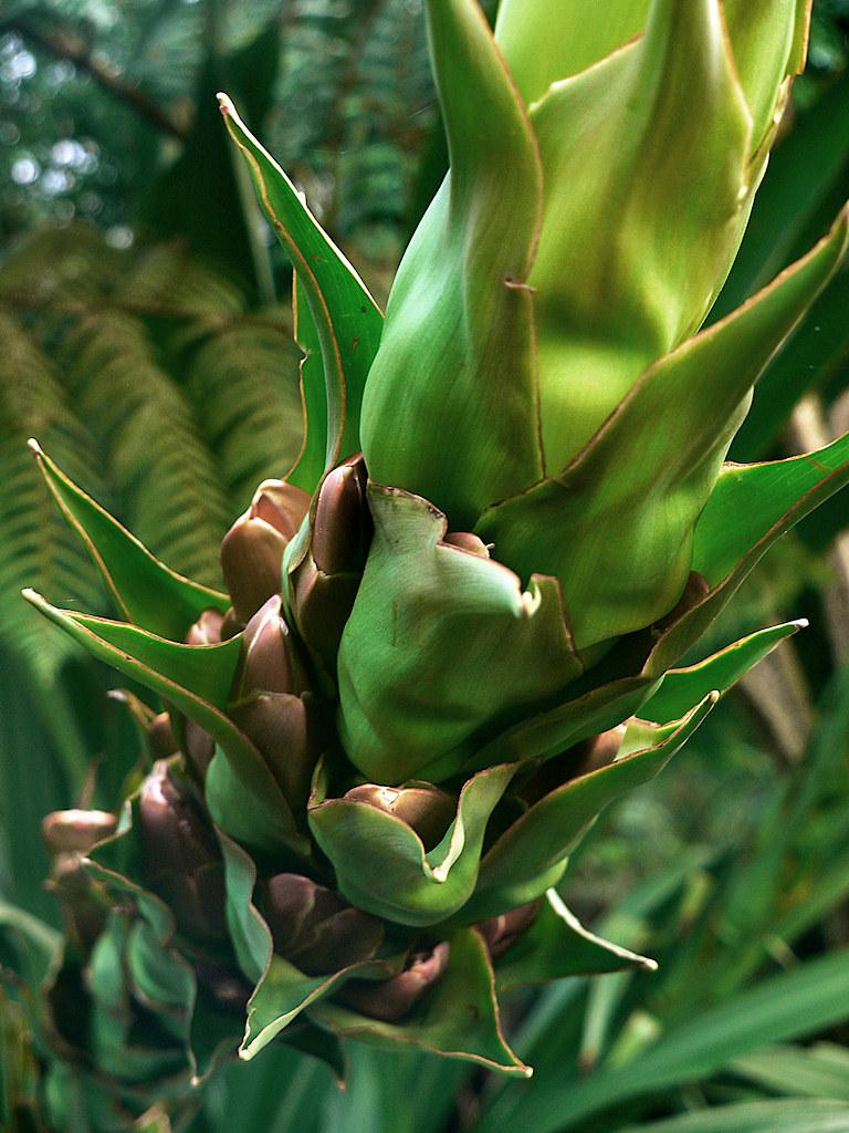 Great Big Monster Plant Tom Donald Flickr