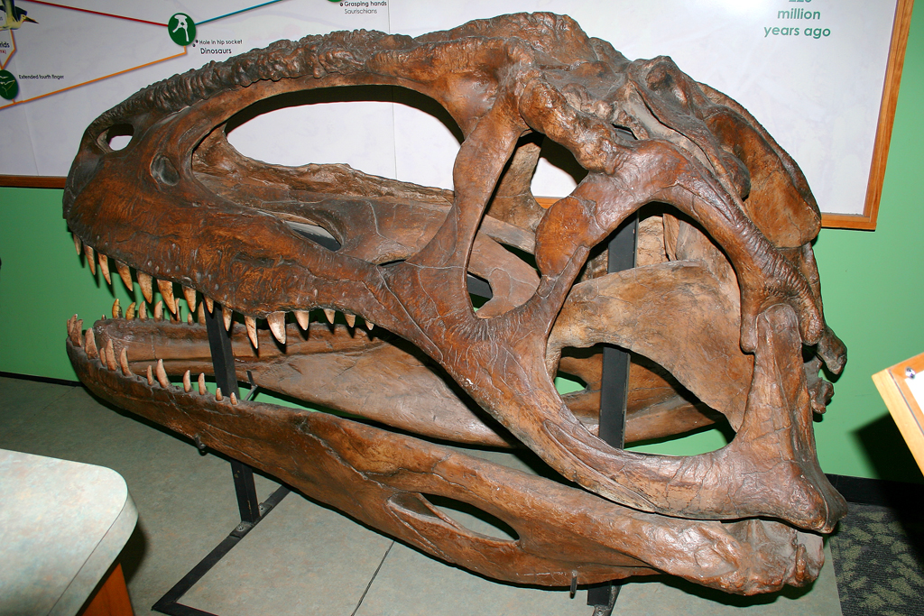 1024 x 683 jpeg 794kBTyrannosaurus