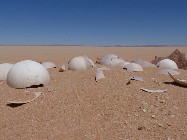 Huevos de avestruz en el desierto Líbico de Egipto