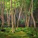 moss garden at gioji temple