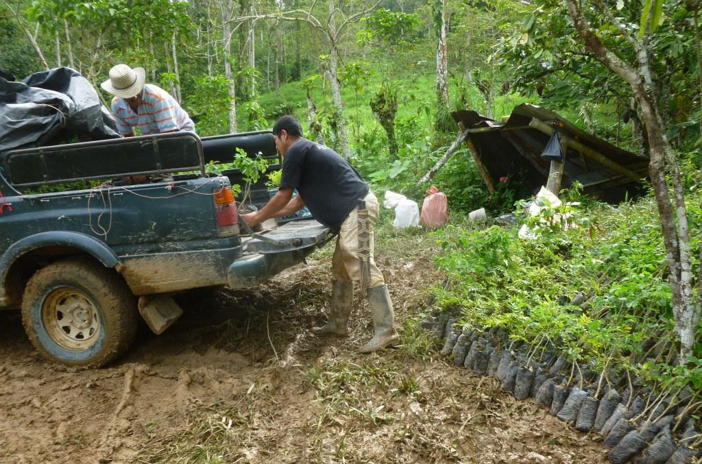 Transporte arboles reforestacion vivero mata de cacao 9 for Matas de viveros