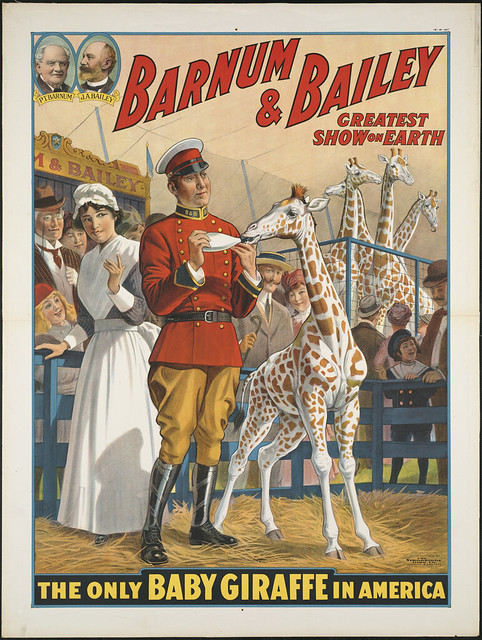 barnum bailey greatest show on earth the only baby giraffe in america flickr photo sharing. Black Bedroom Furniture Sets. Home Design Ideas