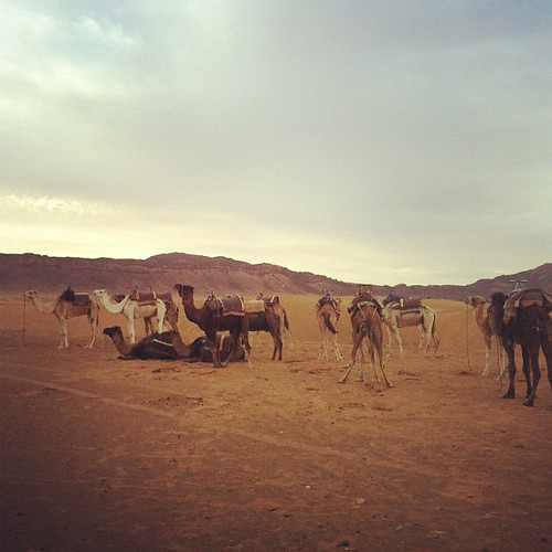 Camels | by Elissa @ 17 and Baking
