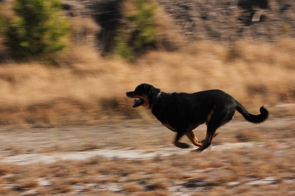 Image result for dog running flickr