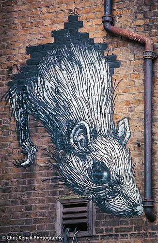 ROA rat | by www.chriskench.photography