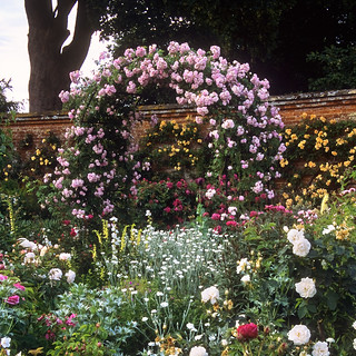 Mottisfont Abbey Rose Gardens, Hampshire, UK | The best romantic rose garden in the world (20 of 20) | Romantic rose pergola covered with pink climber in full bloom | by ukgardenphotos