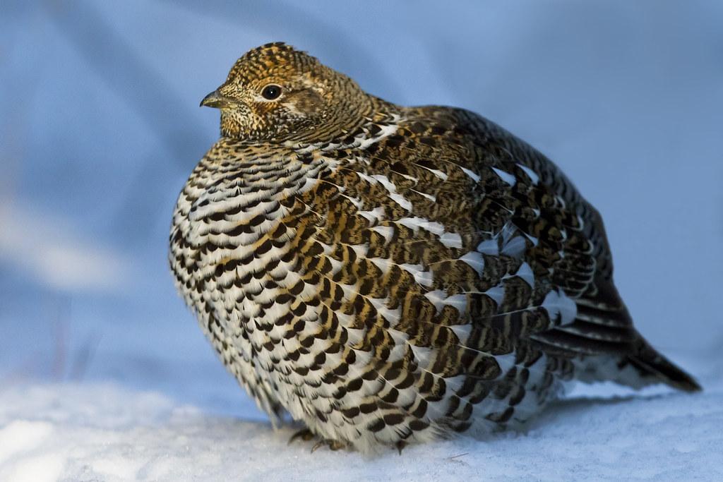 10 Highlight Birds in Michigan  Bird Watchers Digest