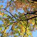 Autumn Leaves, Lucca