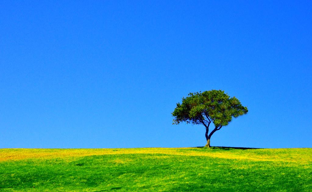 One Tree Hill On The 8 Kilometre Coastal Federation Walk