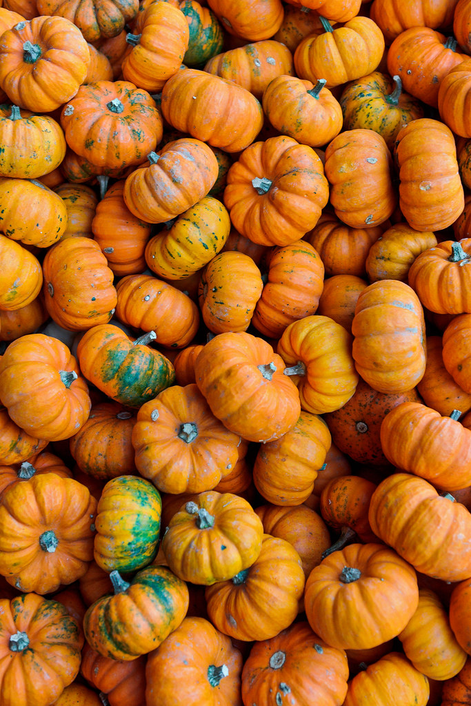 For Sale Sign >> Lots of pumpkins III | Some of the pumpkins available for sa… | Flickr
