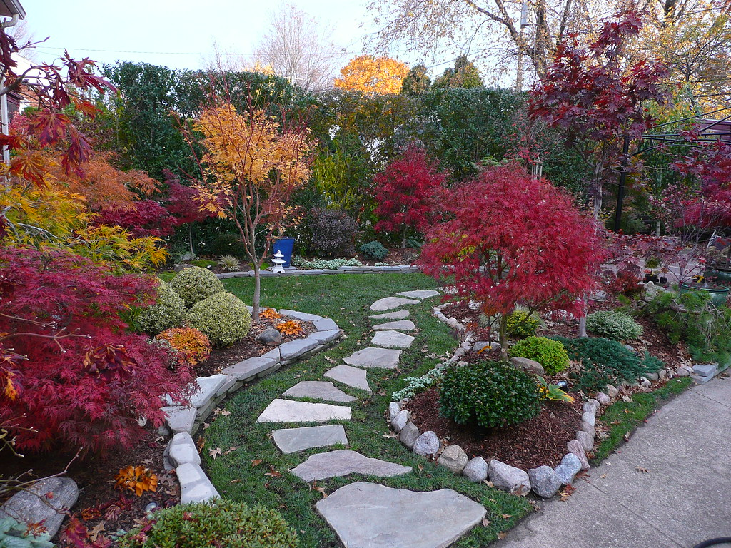 Japanese maple garden fall colors japanese maple garden for Garden design with japanese maple