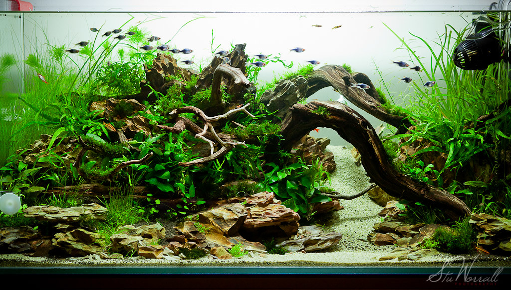 90x45x45cm Planted Aquascape - week 3 | Ive added 25 ...