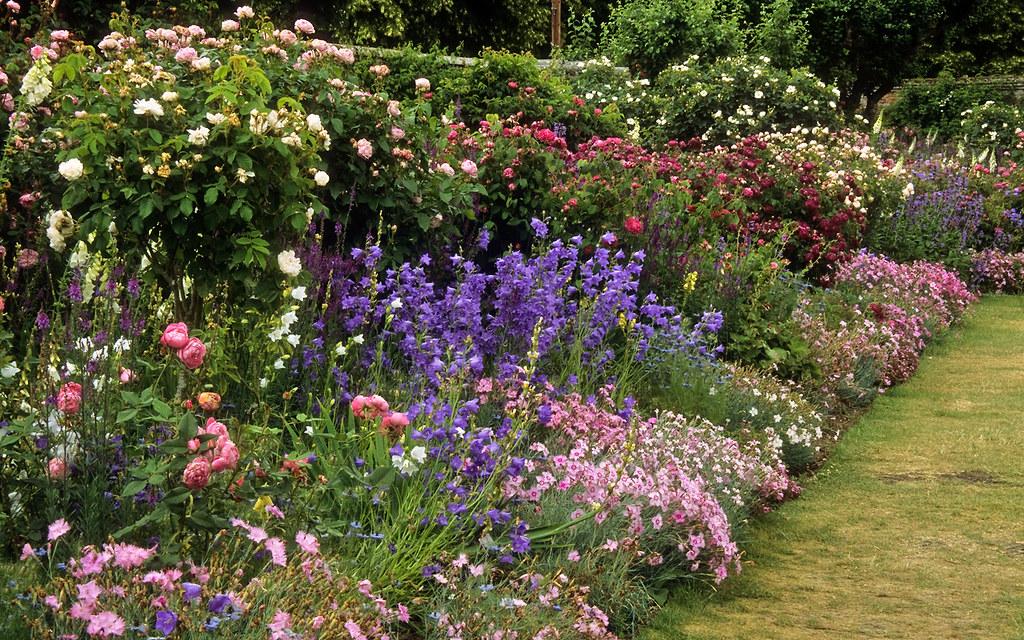 mottisfont abbey rose gardens hampshire uk an outstand. Black Bedroom Furniture Sets. Home Design Ideas