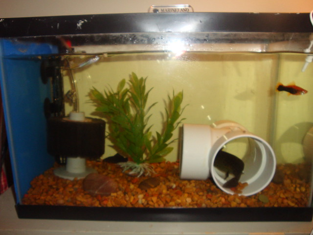Fish Tank Games 5 Gallon Hawkeye 5 Gallon Starter