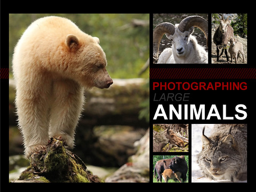 The Art of Photographing Wildlife book sample page 6 | by Cameralabs