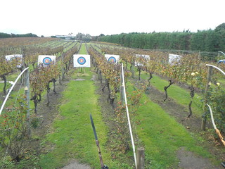 Archery Targets at Wild On Waiheke Winery