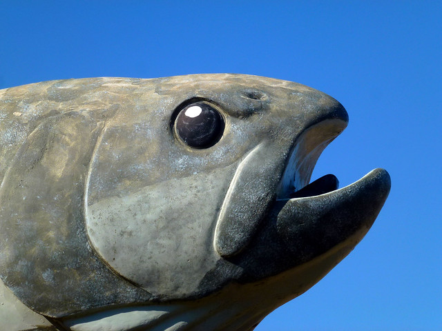 Photo for Fish head app