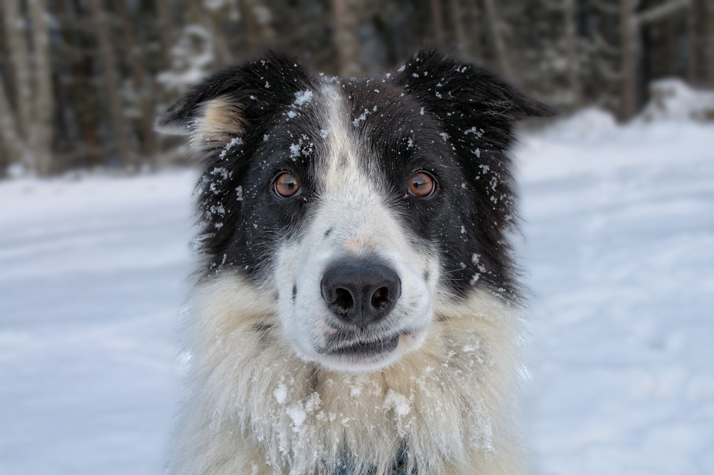 Making A Dog Kennel Plans