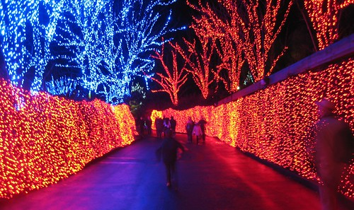 Oregon Zoo Lights Flickr Photo Sharing