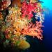 love soft corals