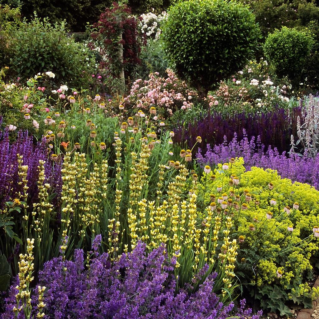 Roses In Garden: Mottisfont Abbey Gardens, Hampshire, UK