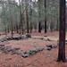 North Carolina, Durham County, Stagville State Historic Site, Stagville Plantation- Foundation of enslaved home