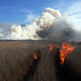 Cape Hatteras National Seashore Interagency Prescribed Fire