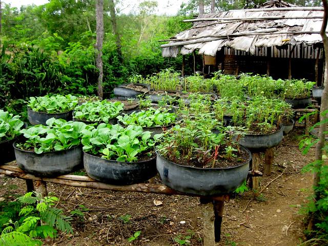 haiti tire gardens recycled tire gardens uusc uua