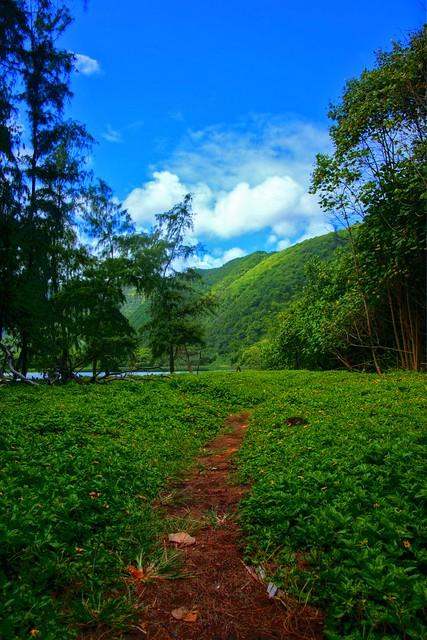 Big Island Pololu Valley Lookout